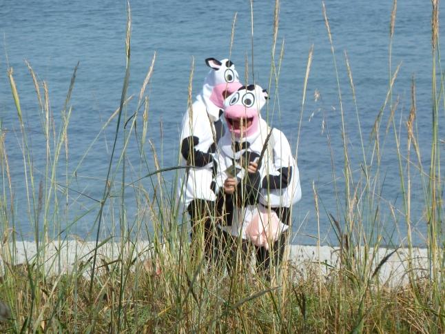Island Farm Cows
